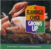 A-Flamngo-Chick