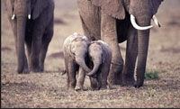 Bff-elephants